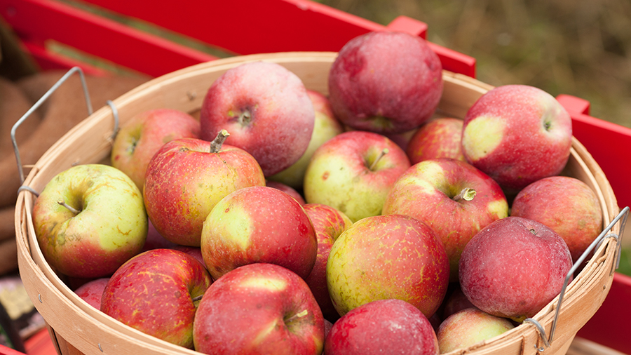 basket of fall apples